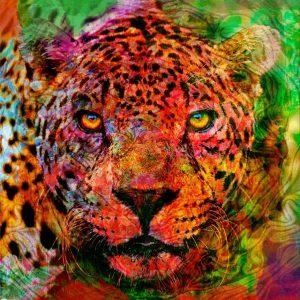 Christian Lange - Jaguar